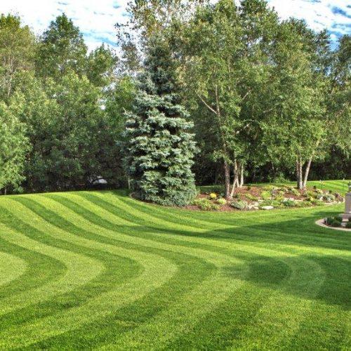 lawn-1